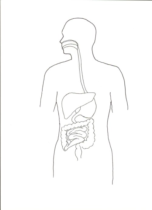small resolution of 1275x1755 human body outline front and back unique picture human body front blank body sketch