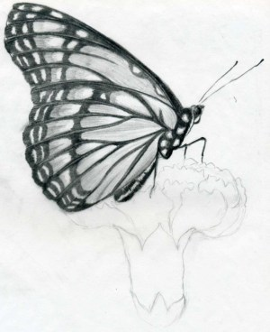 simple butterfly sketch pencil sketches drawings butterflies paintingvalley