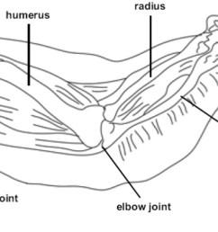1268x632 chicken wing feather diagram chicken wing sketch [ 1268 x 632 Pixel ]