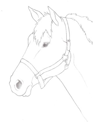 horse drawing head simple sketch pencil drawings outline easy step horses draw getdrawings sketches deviantart realistic paintingvalley library clipart drawn
