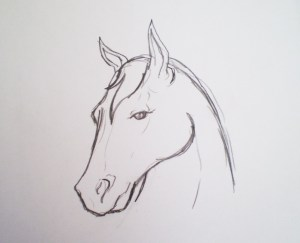 horse simple sketch sketches drawings pencil drawing equine paintingvalley seminar