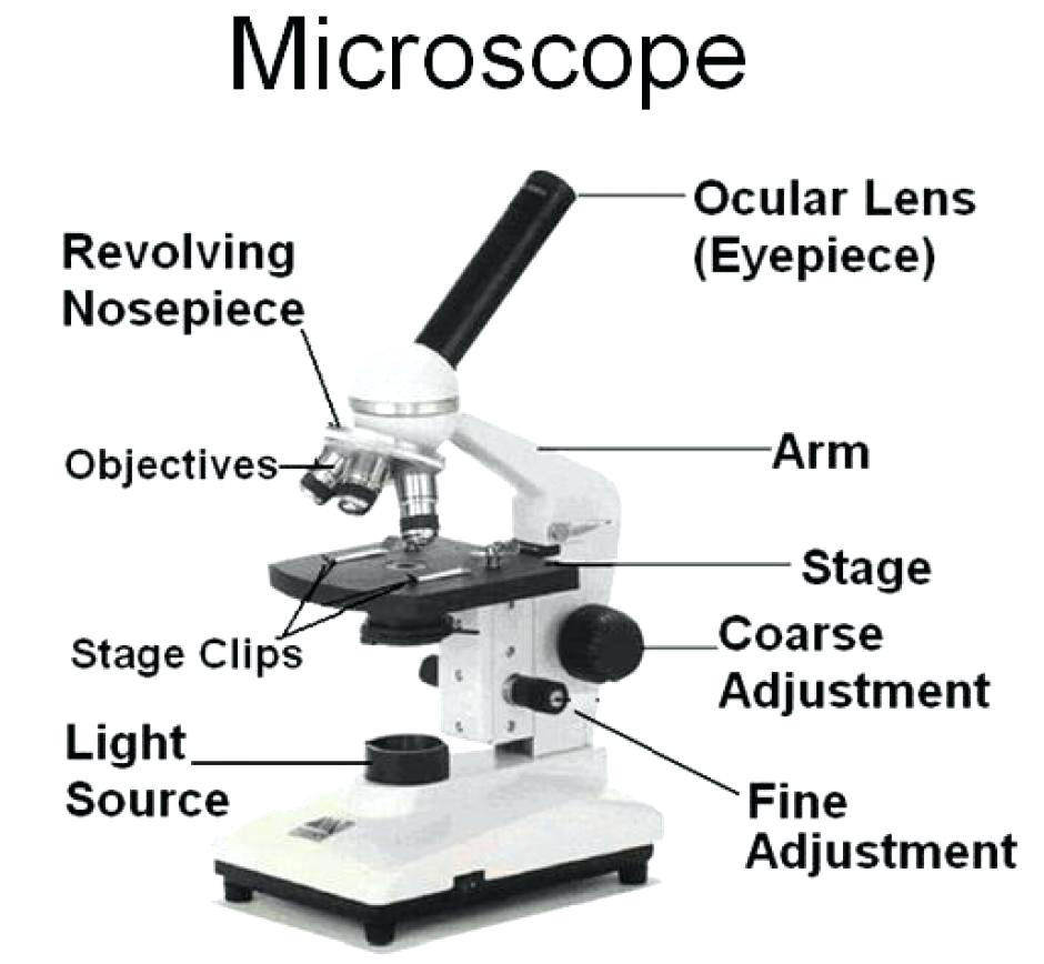 hight resolution of 940x868 unlabeled diagram of microscope microscope parts sketch