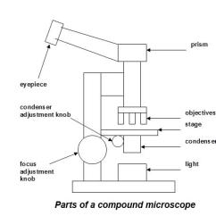Microscope Diagram Enchanted Learning Earthquake With Labels Paintings Search Result At Paintingvalley Com 538x455 Elementary Compound Class 9 Oasissolutions Co Parts Sketch
