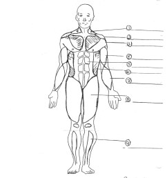 1275x1754 human muscular system diagram printable muscular system sketch [ 1275 x 1754 Pixel ]
