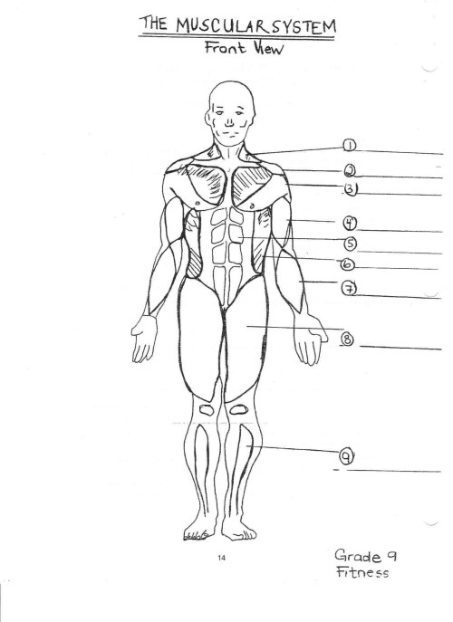 small resolution of 1275x1754 human muscular system diagram printable muscular system sketch