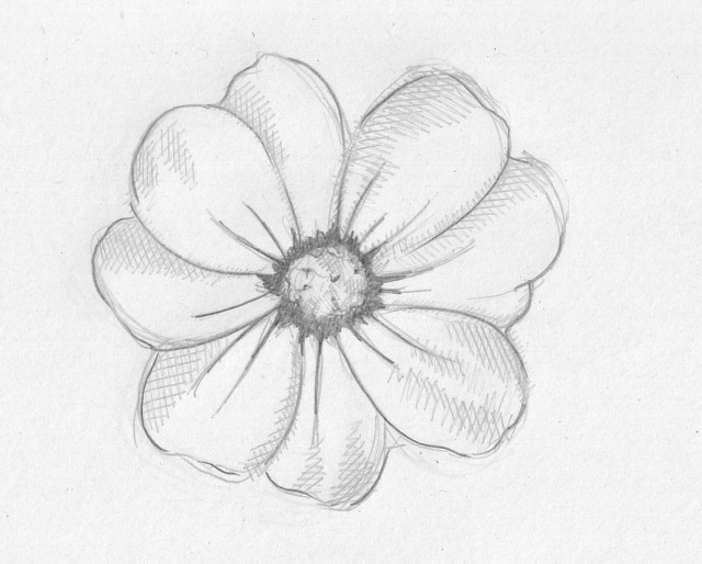 Pencil Sketch Images Flowers at PaintingValley.com ...