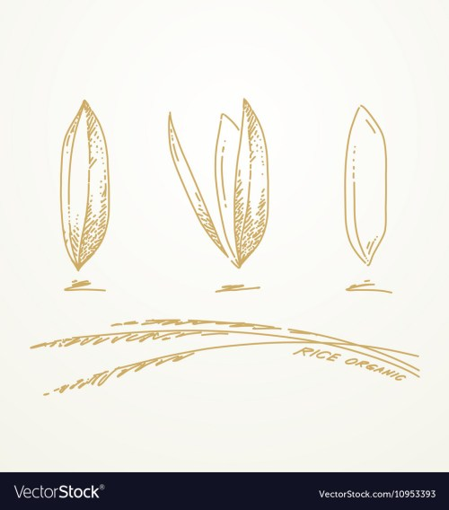 small resolution of 950x1080 drawn wheat rice plant rice plant sketch