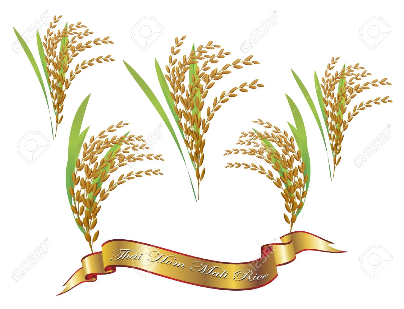 hight resolution of 1300x994 oat clipart rice plant 20 rice plant sketch