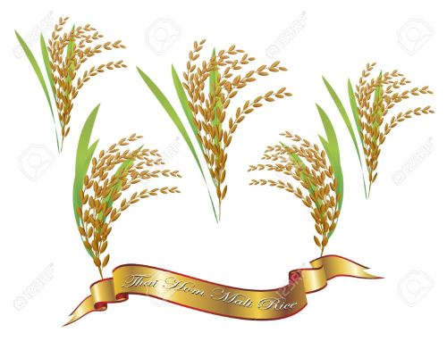 small resolution of 1300x994 oat clipart rice plant 20 rice plant sketch
