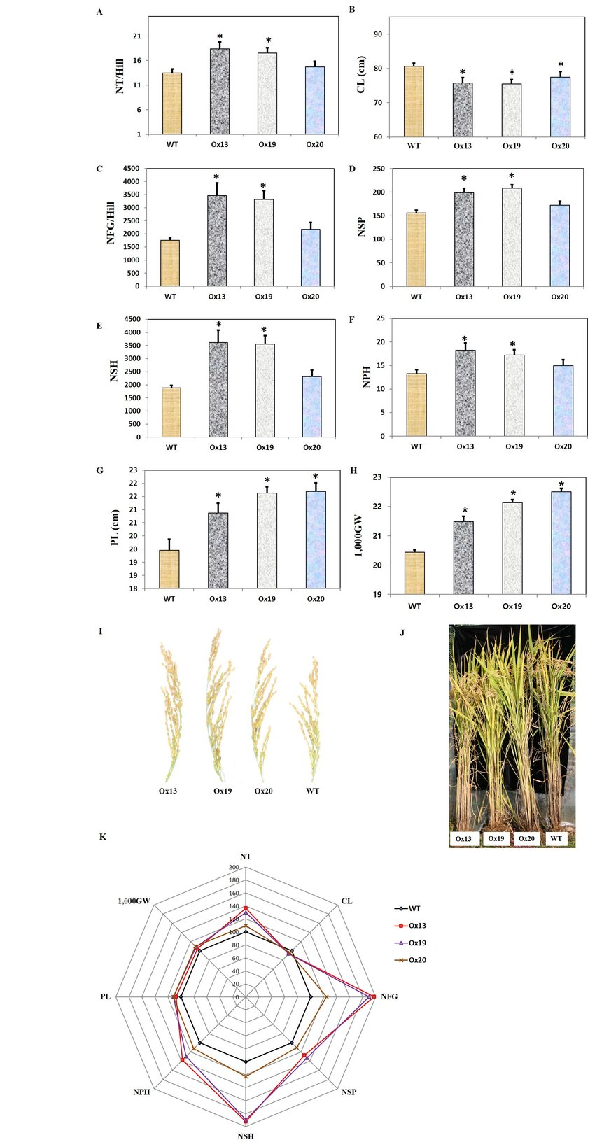 medium resolution of 850x1632 agronomic traits of field grown rice plants under normal rice plant sketch