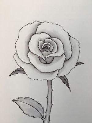 rose easy drawing draw drawings sketches sketch pencil simple flowers step flower roses tutorial very paintingvalley unique beginners sketching painting