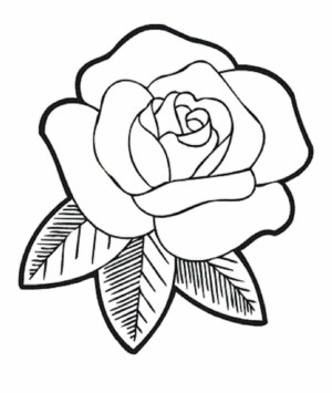 rose easy sketch drawing cool draw roses sketches paintingvalley