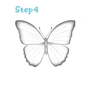 butterfly draw drawings sketch simple easy step sketches beginning drawing butterflies steps pencil wings basic butter beginners beginner paintingvalley veins