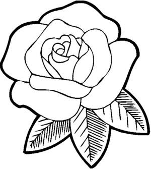 rose flower simple sketch drawing drawings line sketches paintingvalley