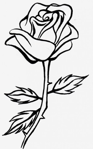 simple rose sketch roses drawing drawings sketches paintingvalley