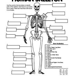 1275x1650 patella skeletal system blank diagram skeletal system sketch [ 1275 x 1650 Pixel ]