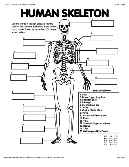 small resolution of 1275x1650 patella skeletal system blank diagram skeletal system sketch