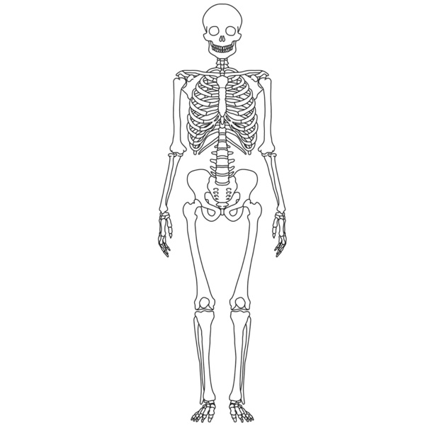 kids skeletal system diagram 1995 toyota camry belt paintings search result at paintingvalley com 600x600 thunderbolt sketch
