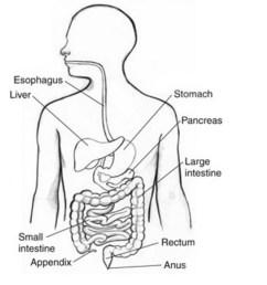 1024x888 digestive system sketch human digestive system diagram sketch of human digestive system [ 1024 x 888 Pixel ]