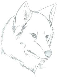 wolf easy sketch drawings cool paintingvalley sketches explore