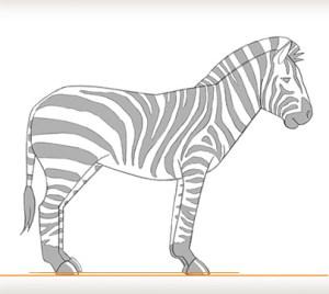zebra draw easy sketch zebras animals paintingvalley sketches fill