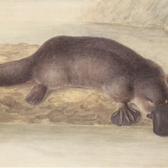Platypus Life Cycle Diagram Needs And Wants Venn Painting