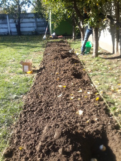 Planting the bulbs in October 2015