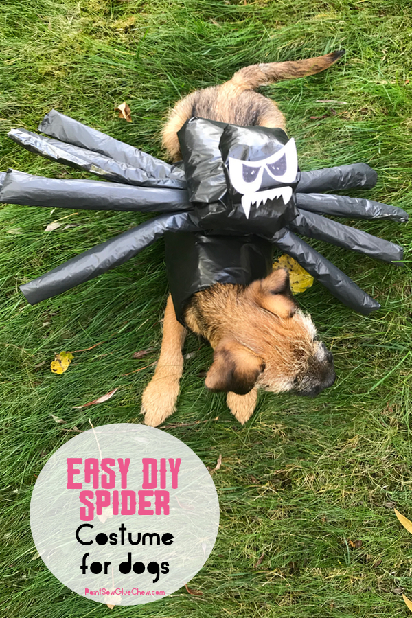 easy diy spider halloween costume for dogs