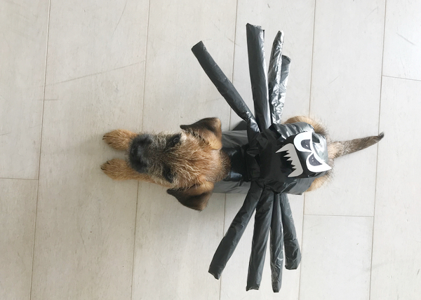 dog in a spider halloween outfil