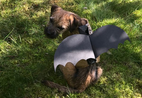 Bat halloween costume for dogs