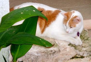 Pretty kitty ~ La Play del Carmen