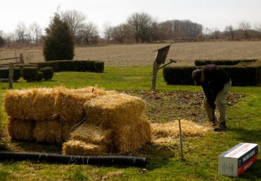 Laying down straw to choke out the weeds