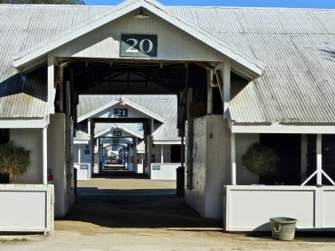 Row after row of barns housing these magnificent thoroughbreds