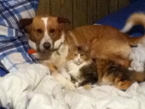 Brach & His Cat - Nova
