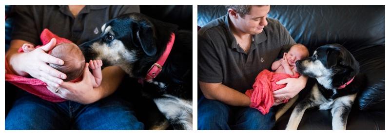 Dog & Baby Newborn Photos Calgary