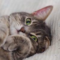 Diagnóstico errado de esquizofrenia foi, afinal, provocado por arranhão de gato