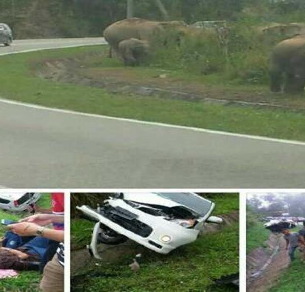 viral-gajah-mengamuk-jeli-palsu