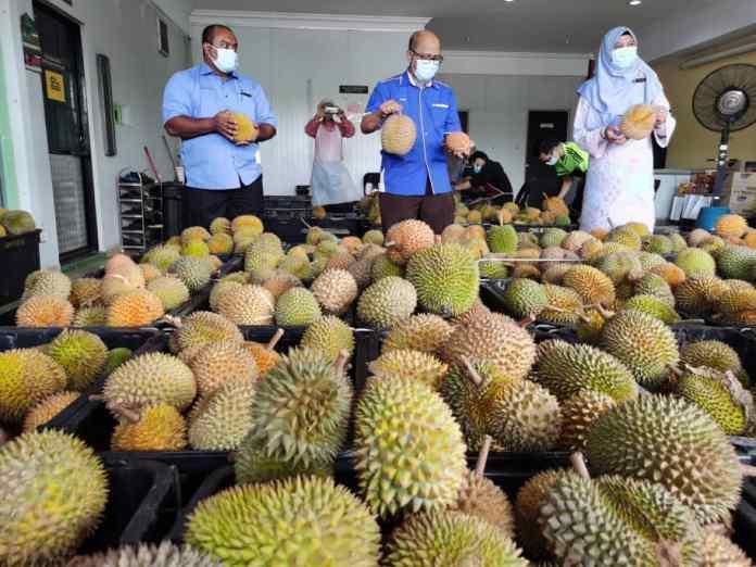 5-tan-metrik-durian-diproses-jadi-tempoyak-setiap-hari