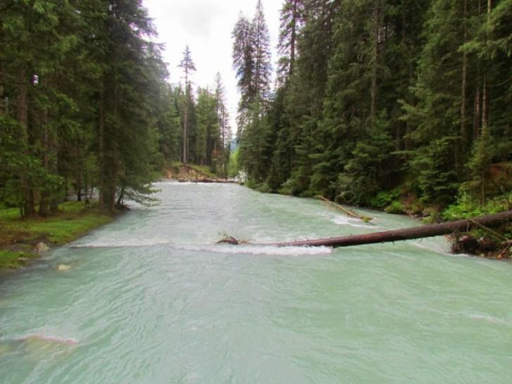 18- Forest Kumrat Valley,Panjkora River Upper Dir, KPKm