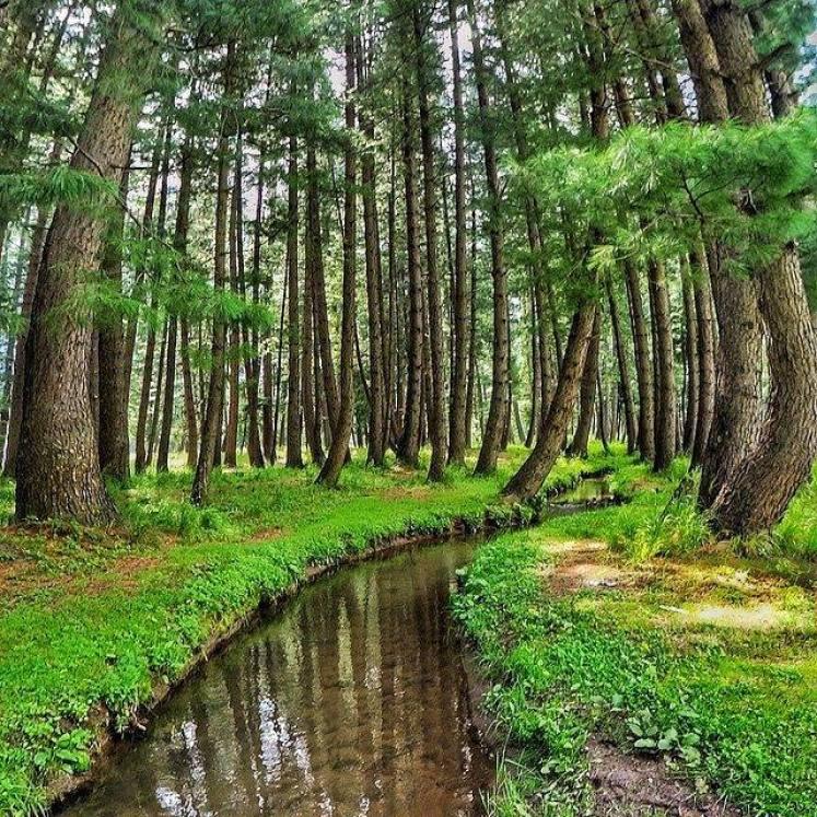 7- Crooked woods of Kumrat Valley, Pakistan
