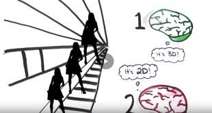 Ever wonder brain processes information work