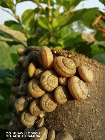 Huawei-fan Muqaddas Ahmad snails at the park