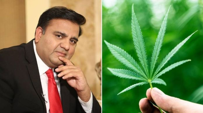 Cabinet approves first Licence for Medical & Industrial use of 'Hemp' (Bhang)
