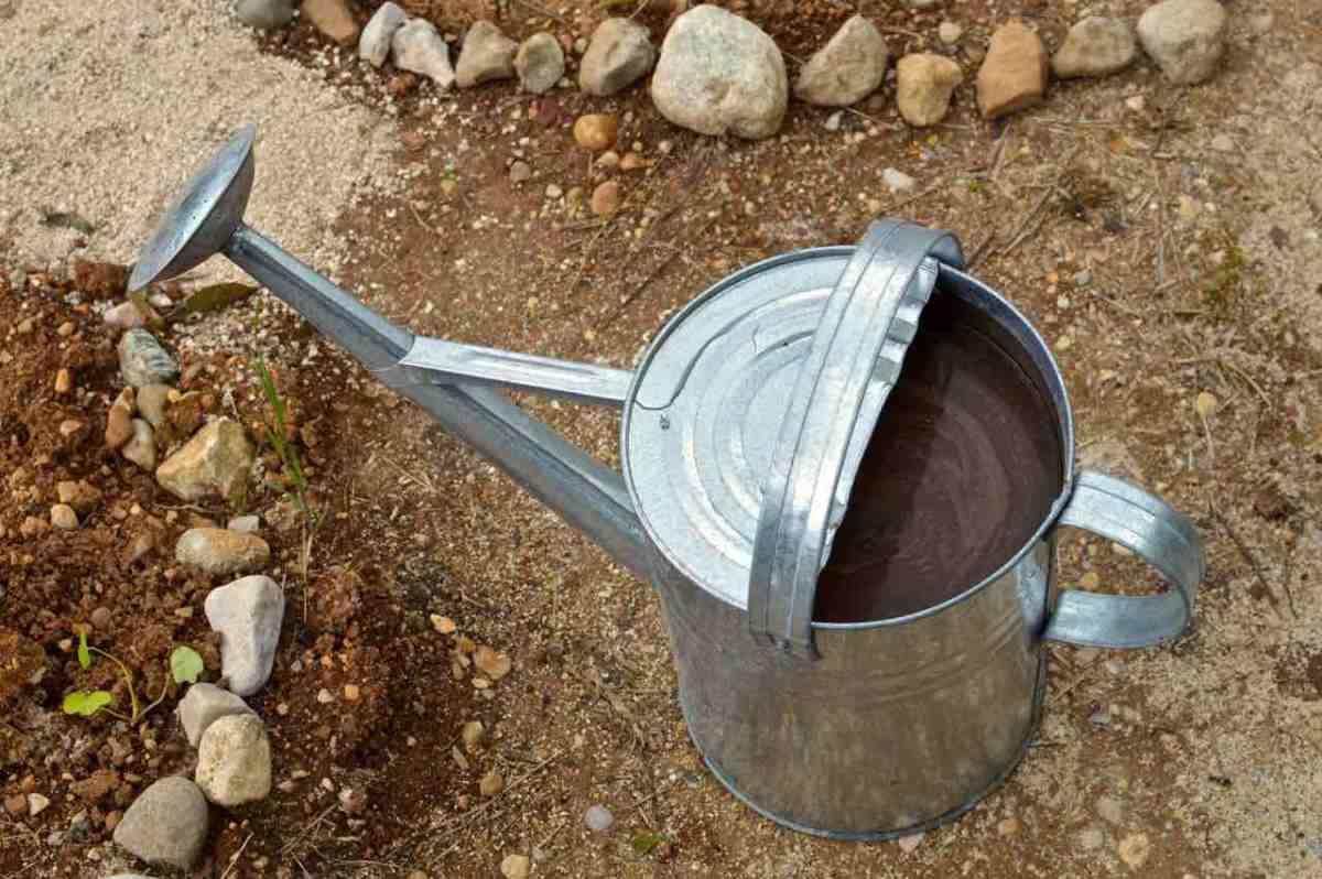 DIY Organic fertiliser from leftovers: banana peels, coffee grind & egg shells