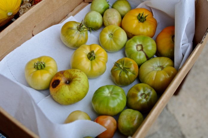 ripen green tomatoes1