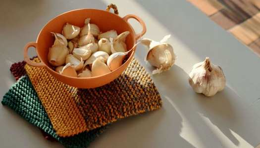 Planting garlic in autumn