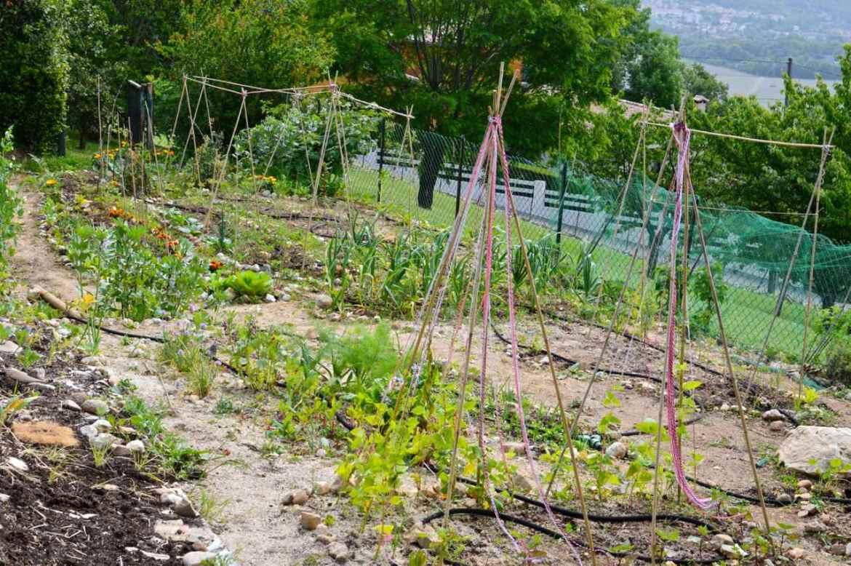garden may3