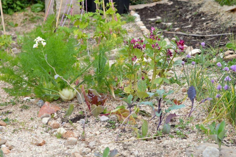 garden update may