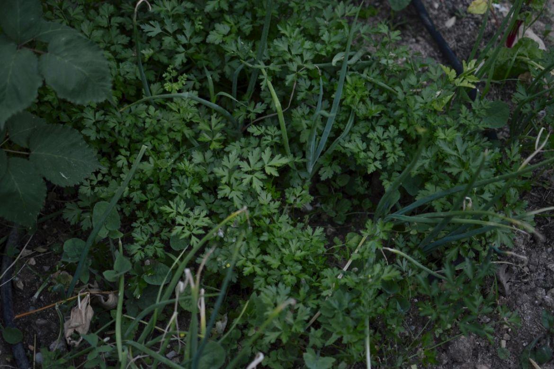 garden update june38