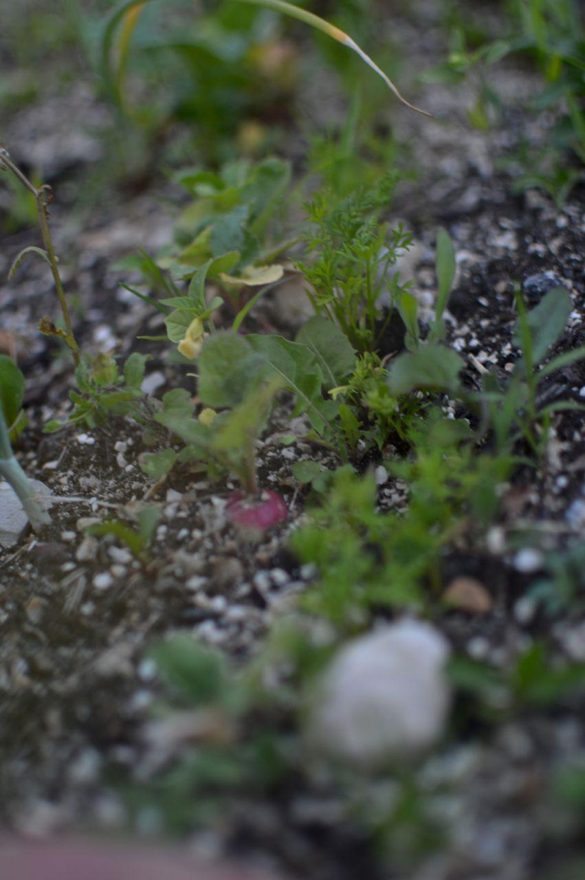 garden update june39